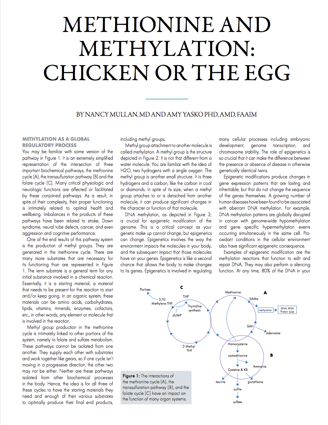 Methionine and Methylation: Chicken or the Egg